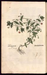 """Afficher """"Histoire des plantes"""""""
