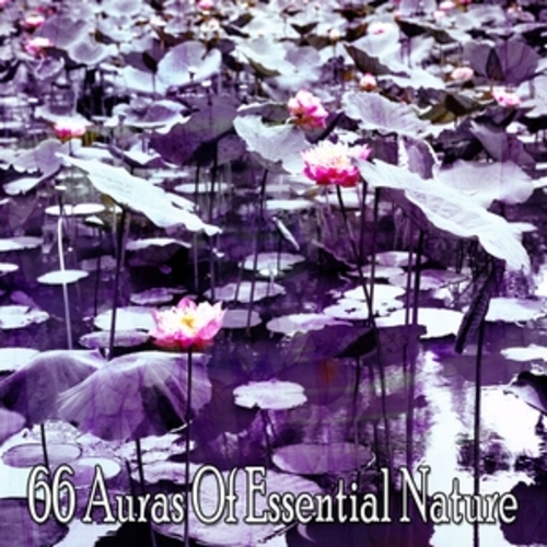 "Afficher ""66 Auras Of Essential Nature"""